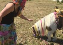Me petting the unicorns!